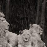 Sucessão na empresa familiar: intuição e objetividade podem contribuir para o sucesso